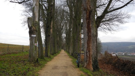 regensburg-rundumadum-874