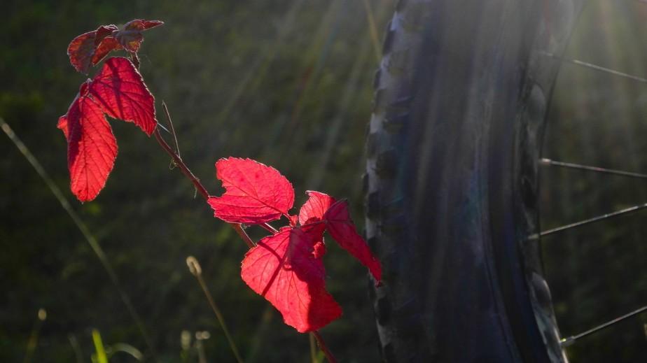 Kalt, aber Sonne – MattingerHänge