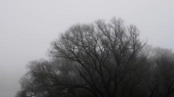 nebel-sonne-548