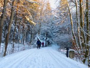 falkensteinradweg-schnee-685