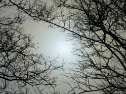 nebel-sonne-638