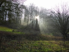 nebel-sonne-651