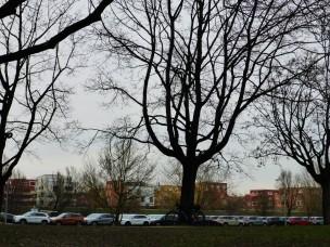 lieblstrasse-310