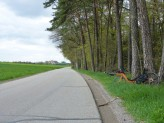 oberlichtenwald-66