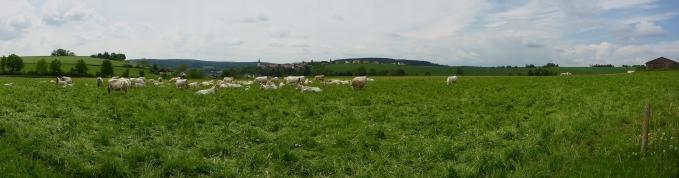 gundelshausen-60