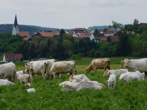 gundelshausen-61
