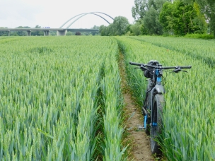 tag-des-fahrrads-78